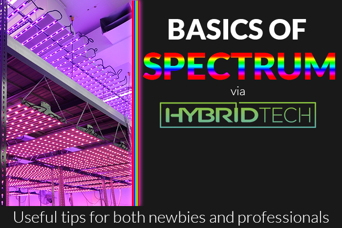 The Basics of Spectrum