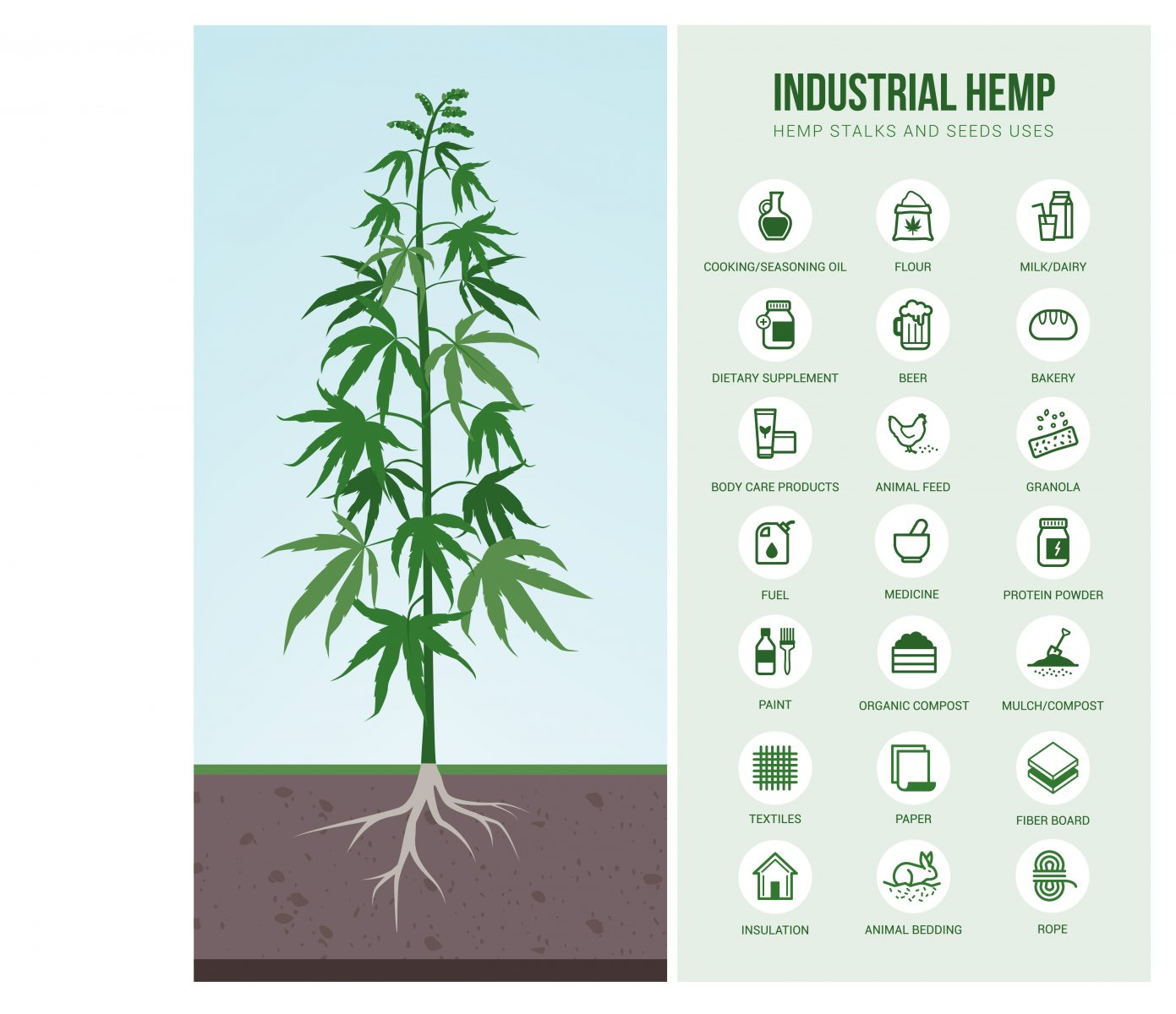 The many uses of industrial hemp